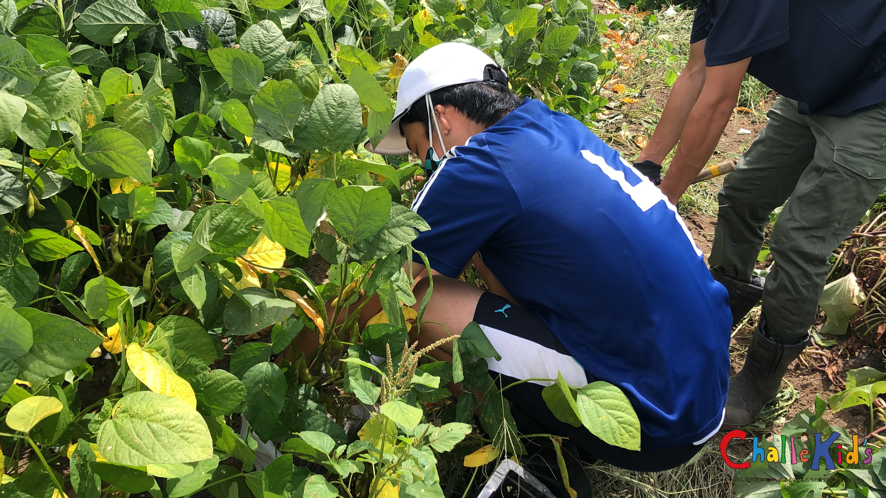 野菜づくりのお仕事 210723−13