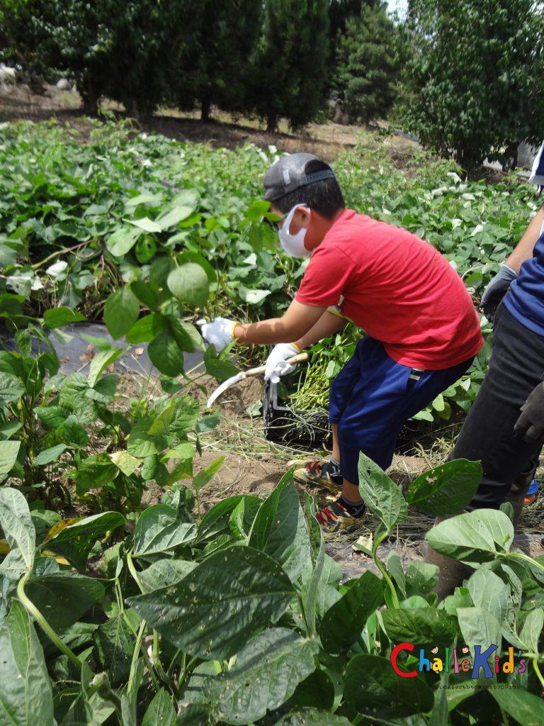 野菜づくりのお仕事 210723−4